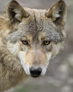 Lone Wolf Terrorism