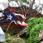 Fallen Ficus Tree Earns Painter's Reward