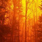 Widlfire, Great Smoky Mountains - NPS