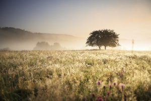 Lone tree in a grassy meadow with dramatic sunlight
