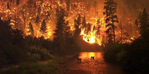Two deer stand in a river as the forest around them burns with wildfire